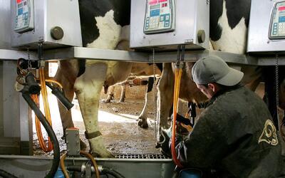 Trabajadores de la industria de lácteos trabajarían en condiciones deplo...