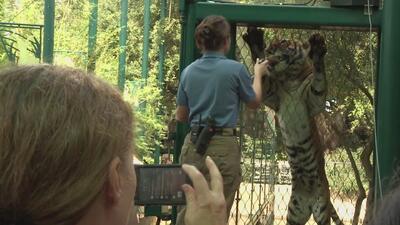 El zoológico de Houston tendrá una celebración especial para concientiza...