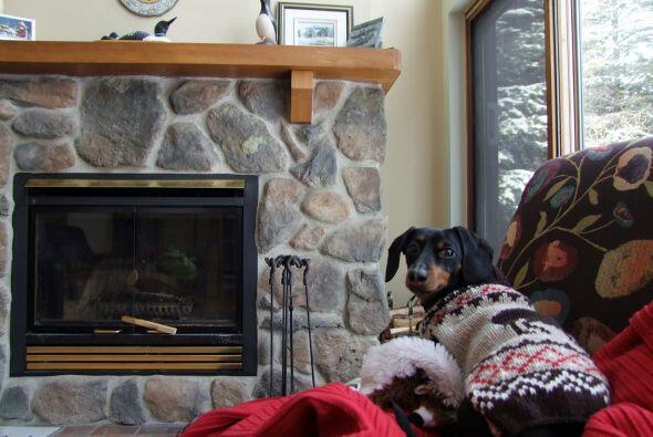 Ryan asegura que Crusoe ha usado abrigos desde que era pequeño para resi...