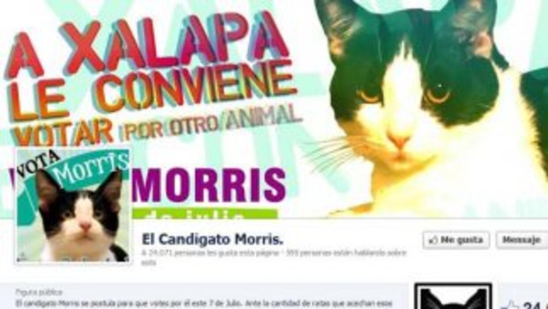 """El perfil del """"candigato"""" Morris."""