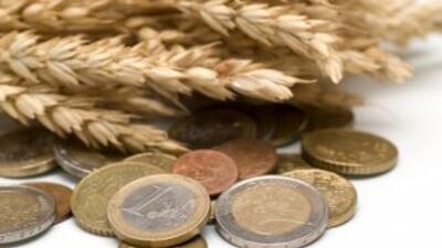El precio del trigo, maíz y soja cayeron esta semana en Chicago.
