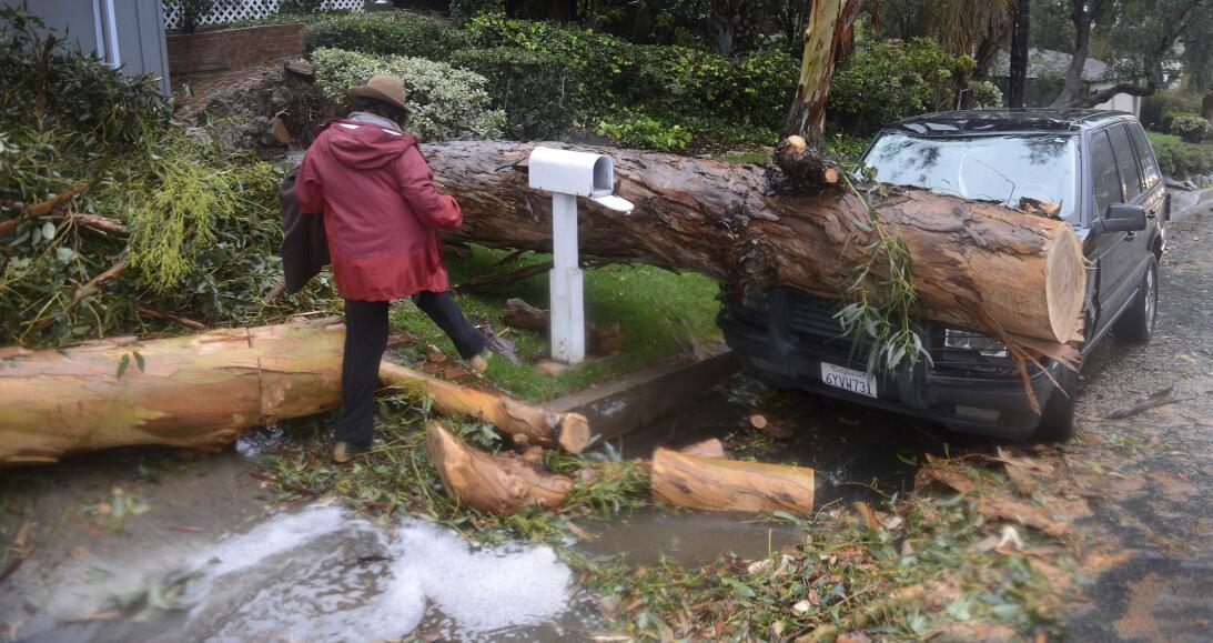 Un enorme árbol colapsó sobre un coche en la ciudad de Laguna Beach, en...