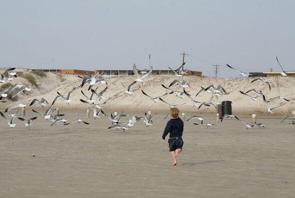 También podrán disfrutar de las más de 100 millas de playa, así como del...