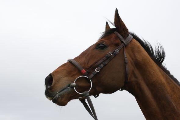 Los caballos aprenden por señas: de esta manera se comunican entr...
