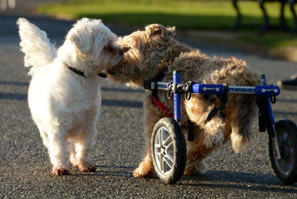 Esta pareja tuvo que gastar miles de libras en la silla de ruedas especi...