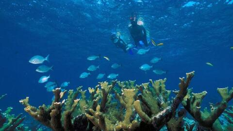 Buceadores en Elkhorn Coral
