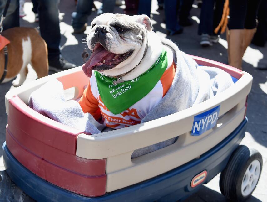 """El representante del NYPD durante un descanso en su """"patrulla""""."""