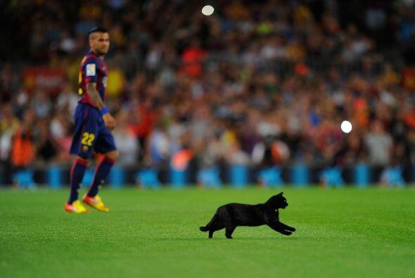 Tanta gente a su alrededor espantó al gato negro y causó que empezara a...