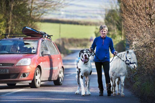 Ronnie sale a pasear por el vecindario de Cornish Village.