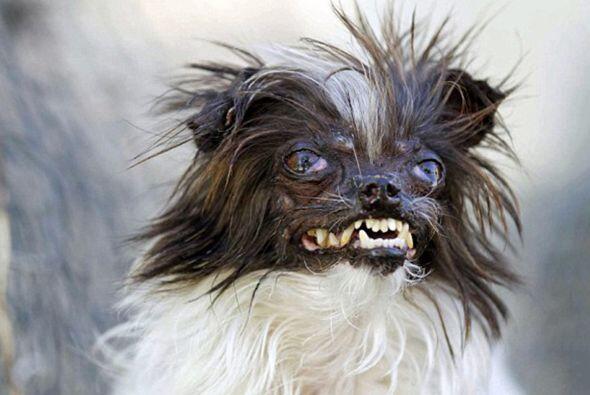 El Perro más Feo - Si te dan pesadillas cada vez que miras a tu perro, ¡...