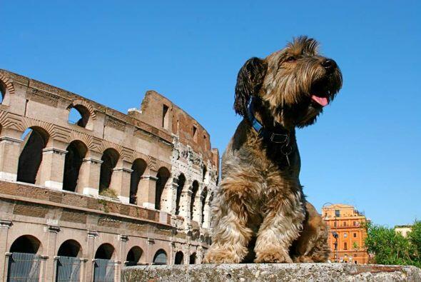 No podía faltar entre sus destinos turísticos  el Coliseo, tan emblemáti...