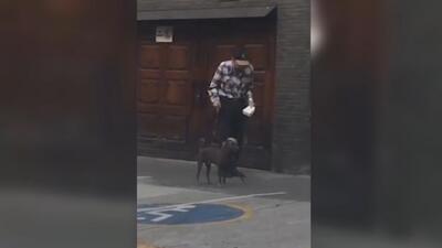 La paciencia de este perro al esperar a su anciano dueño asombra a muchos en México