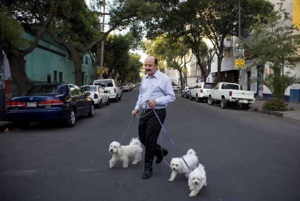 En México, la convivencia con animales se aplica a personas con enfermed...
