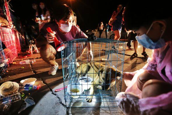 La mayoría de los perros eran callejeros, pero también había perros de r...