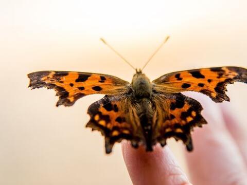 ¿Has visto cómo es que inician su vida las mariposas?