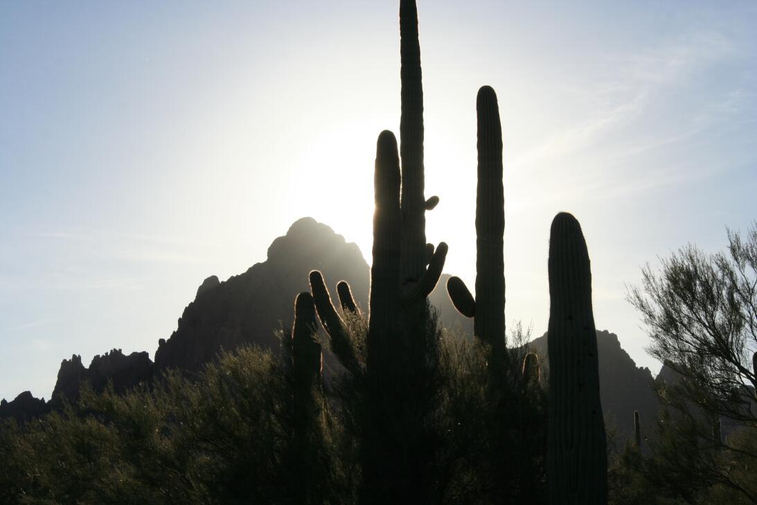 Ironwood Forest (Arizona)