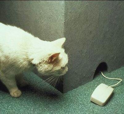 Ni los gatos se salvan de las bromas.