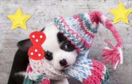 En el día de vestir a las mascotas, radioescuchas del show enviaron fotos.