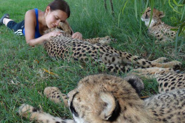 Una gran conexión que le permite acercarse a los animales más feroces si...