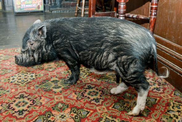 Los propietarios del pub se dieron cuenta cuando la vieron rondar entre...
