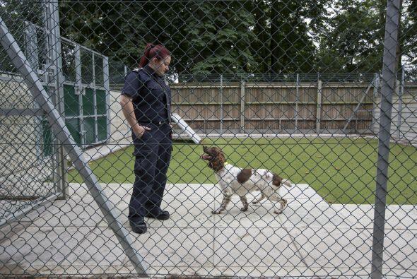 La mayor parte del trabajo la han hecho los perros que trabajan en el ae...