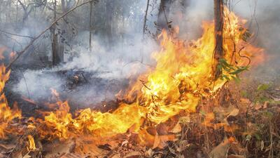 Alarmante incendio forestal en San Bernardino, California