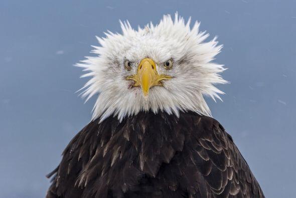 Mientras buscaba alimento con fuertes vientos en su contra, ¡quedó muy d...