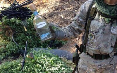 Agente muestra una botella de tequila hallada en el sembrado de marihuana