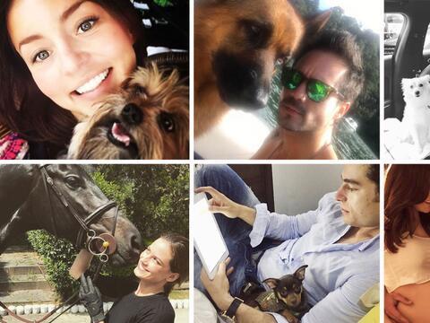 Framosos de novela y sus mascotas