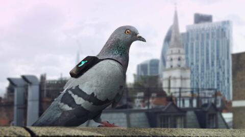 Tecnologías Verdes Pigeon-Air-Patrol-Feature-Image-03162016.jpg