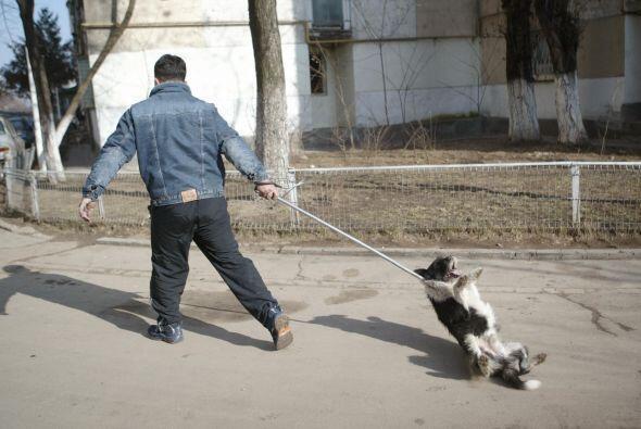 Otra forma de protegerse es evitando que su mascota muerda a alguien. Lo...