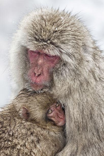 ¡Un rico baño caliente para estos monos!
