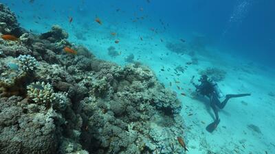 Planeta Visión: La importancia de los arrecifes de coral para el equilibrio medioambiental