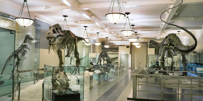 Museos para niños en New York
