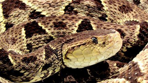 Conservación de Especies IMG_0214-001.JPG