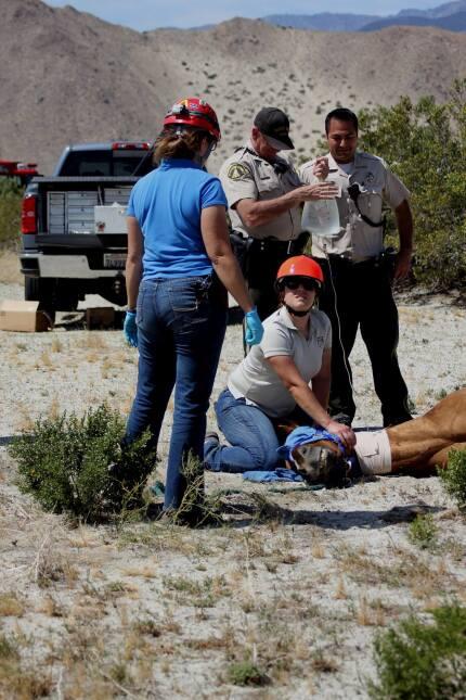El caballo recibe primeros auxilios tras ser rescatado en helicóptero