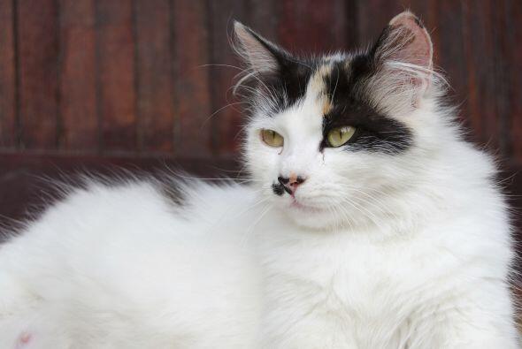 'Los gatos transmiten enfermedades peligrosas para tu bebé' este es un m...