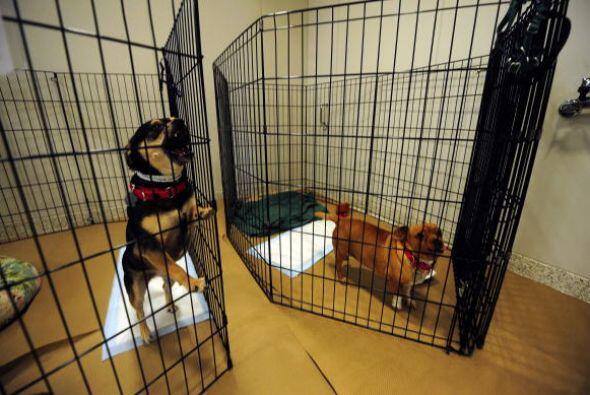 Muchos perros que son vendidos en las tiendas están bajo malas condicion...