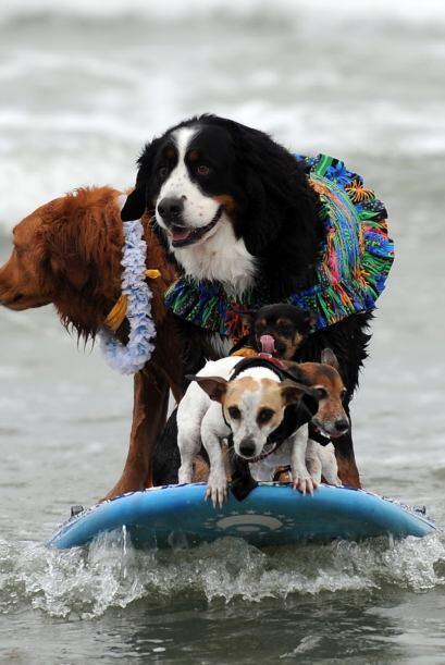Unos entraron en la categoría de surfear en equipo, pero decidier...