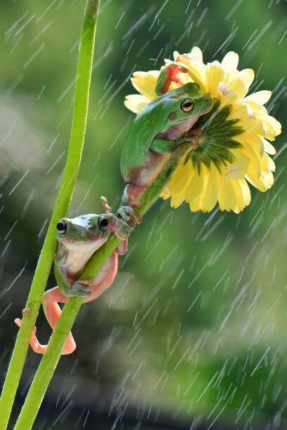 Ellas, bajo las flores en Jakarta, Indonesia, quieren mantenerse secas.