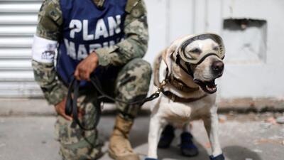 En fotos: Suman esfuerzos para ayudar a los afectados por el terremoto en México