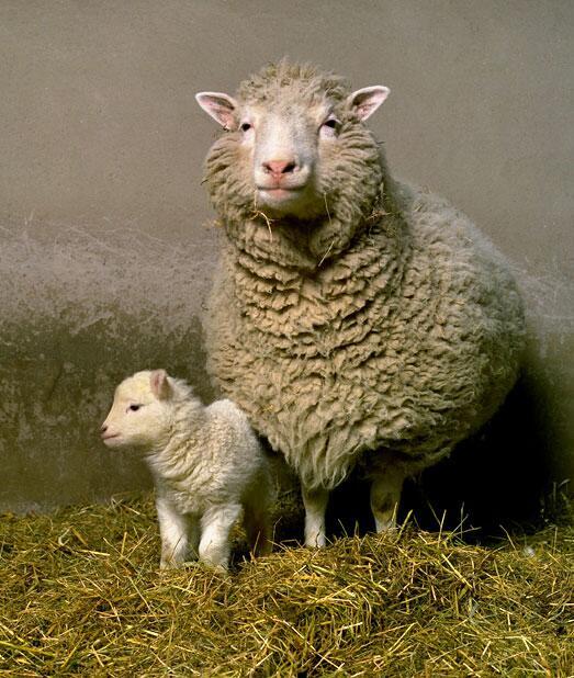 Dolly salud clonación