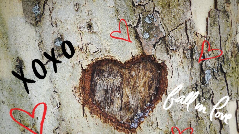 Arbol marcado en forma de corazón