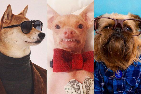 Estos perros te roban la mirada y el corazón, descubre por qué se han he...