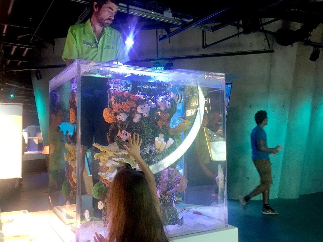 En fotos: una visita por el nuevo museo de la ciencia de Miami Image upl...