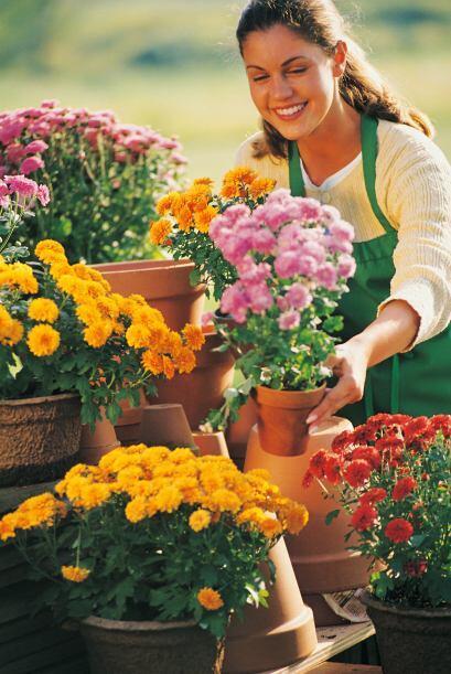 Plantas de la temporada. Puedes sustituir las especies que no resistan e...