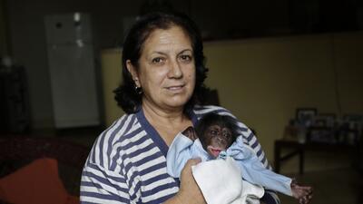 En fotos: Estos bebés chimpancés crecen como niños en Cuba