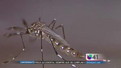 Aumentan los casos de chikungunya en Texas