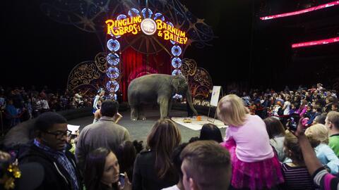 La última vez que se abrirá el telón del Circo Ringling Brothers será el...