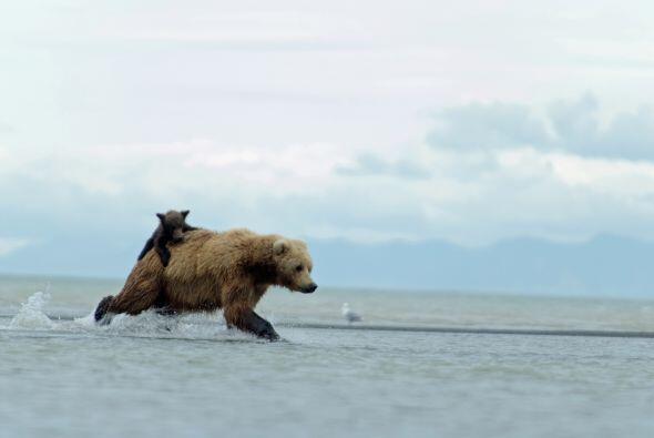 En cualquier momento corría bruscamente para alcanzar a su presa